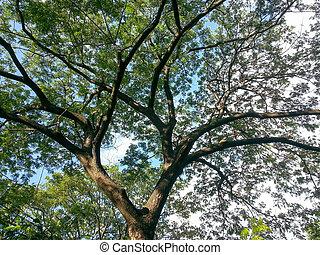 Backlit Tree Leaves