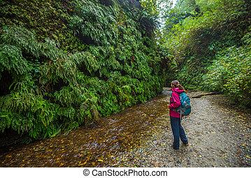 Backpacker exploring Fern Canyon California