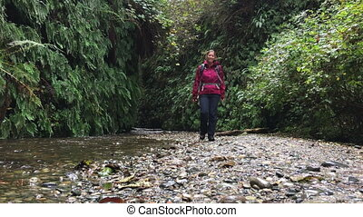 Backpacker exploring Fern Canyon California - Fern Canyon...
