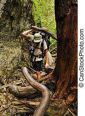 Backpacker moving through tree roots and fallen timber in Slovak Paradise National Park