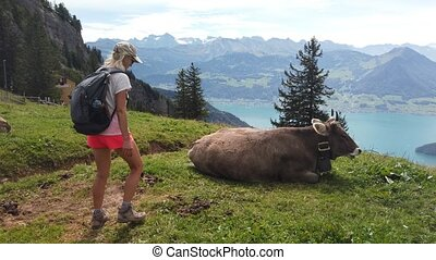 Happy backpacker girl by a cow in alpine meadow along Rigi-Scheidegg railway with aerial view of Swiss Alps, Schwyz basin, Lake Lucerne. Tourism in Canton of Lucerne, Central Switzerland.