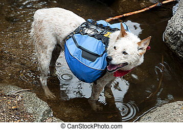 Backpacking Dog - Dog, Red Heeler Cattle Dog with blue...
