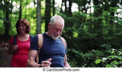 backpacks, nature., турист, гулять пешком, лес, старшая,...