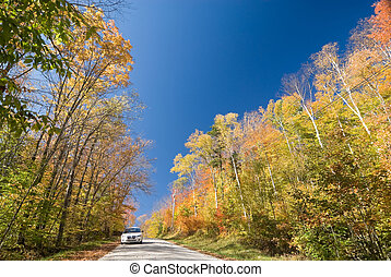 White car on an unpaved dirt road in a vibrant autumn forest