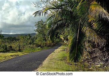 Backroads of the Big Island