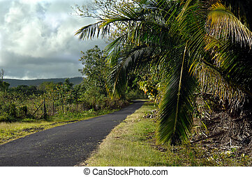 Backroads of the Big Island