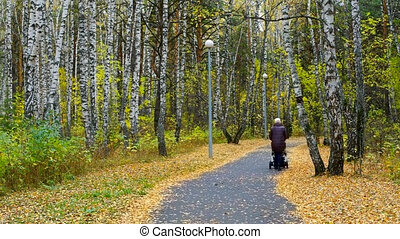 backside view granny walks with baby carriage in park -...