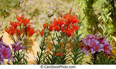 Backyard Flowers summer garden beautiful flower