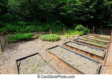Backyard garden bed