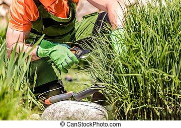 Backyard Garden Maintenance