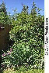 Backyard garden perennials