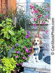 Backyard garden with dog statue