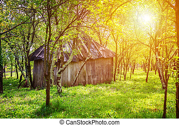 Backyard garden with small shed and trees