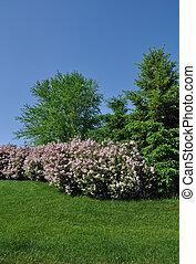 Backyard Landscaping