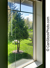 Backyard view through the window