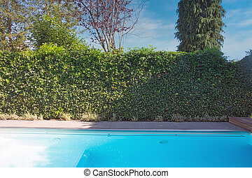 Backyard with outdoor inground residential swimming pool, garden, deck and green hedge sunny day in the summer