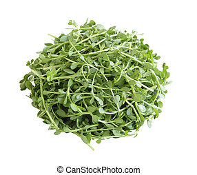 Bacopa monnieri Bitter Leaf - Pile of Bacopa monnieri...