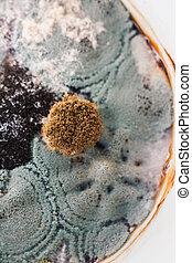 bactérie, boisson, fungal, surface, cup., ?n, moisissure