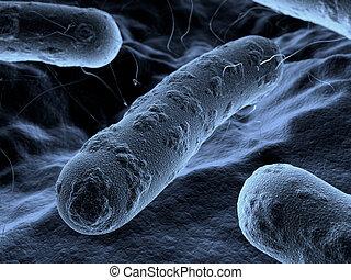 bactérie, sous, vu, balayage, microscope