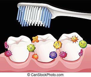 Bacteria between teeth when brushing