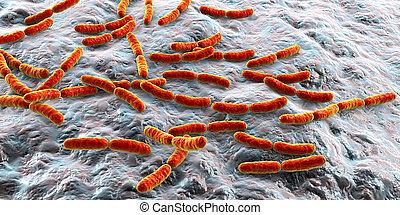 bacteria, jelito, lactobacillus, mały, normalny, flora
