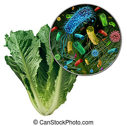 Bacteria On Vegetable Danger - Bacteria and germs on...