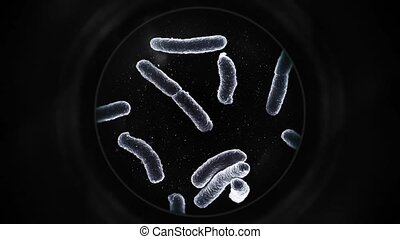Bacteria Under a Microscope - Black