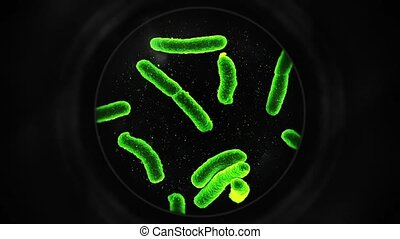 Bacteria Under a Microscope - Green