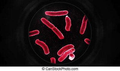Bacteria Under a Microscope - Red