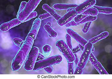 bacterias, bifidobacterium, anaerobic, rod-shaped, gram-positive