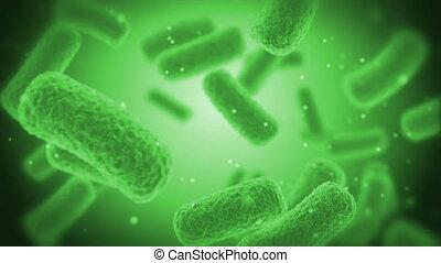 bacteries, vert, x-ray.