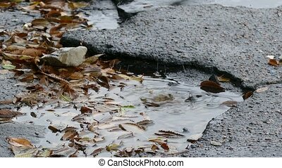 bad asphalt tarmac rain pits in a pool of floating leaves are falling drops of splashing