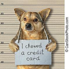Bad dog chewed a credit card 2