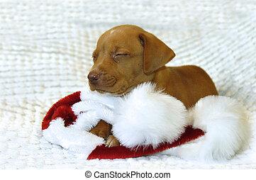 Bad Dog for Santa