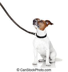 bad dog looking up