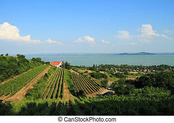 Landscape of the beautiful lake Balaton in Badacsony