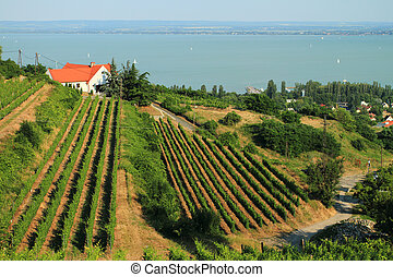 Badacsony - Balaton - Landscape of the beautiful lake...