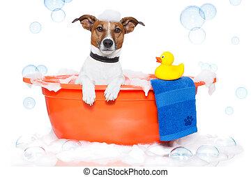 Badewanne, bunte, Nehmen, hund, Bad, Ente, Plastik