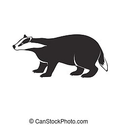Badger on short legs isolated on white background. Forest...