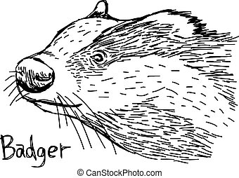 badger's head - vector illustration sketch hand drawn with black lines, isolated on white background