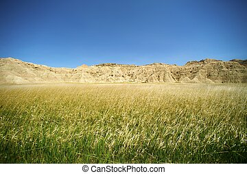 Badlands Meadow