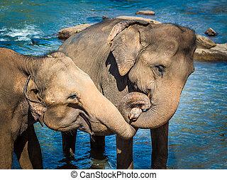 badning, flod, elefanter