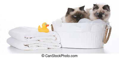 badning, kat