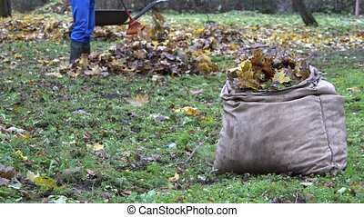 bag full of autumn leaves and blurred worker rake colorful foliage in farm. 4K