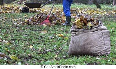 bag full of leaves and blurred gardener worker rake colorful foliage. 4K