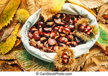 Bag of delicious chestnuts with leaves and husks