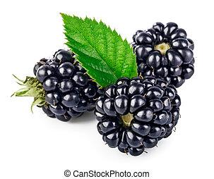 baga, amora preta, com, folha verde, fruta fresca
