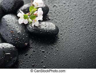 bagnato, zen, terme, pietre, con, primavera, blossom., fuoco...