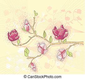 baground, magnolia, branche