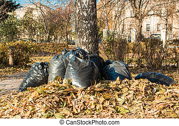 Bags of leaves, autumn leaf fall and among the trees on a bright sunny day with blue sky